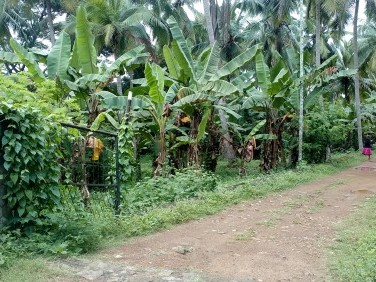 Land For Sale At Ottapalam Near Mathurmana & Parthasaradhy Temple
