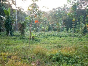 85 Cent plot or 4 acre land for sale