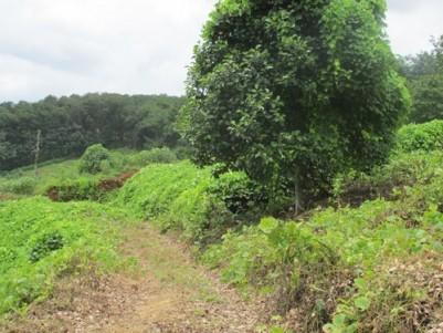 1.90 Acre Land for Sale at Chemmandur,Punalur,Kollam.