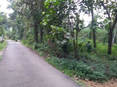 104 CENT HOUSE PLOT FOR SALE AT KANJIRAPPALLY