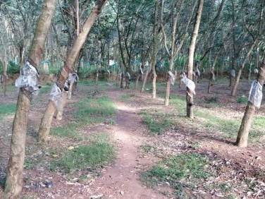 Residential Land (67 Cents) for Sale at Patharam, Kollam Dist.