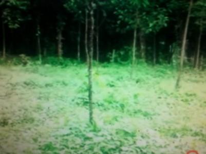 65 Cent Land for sale at Karimannoor,Thodupuzha ,Idukki.