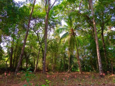 70 Cents of Huge Plot with Old Tharavade House in Quiet Area of Alavil,Kannur.