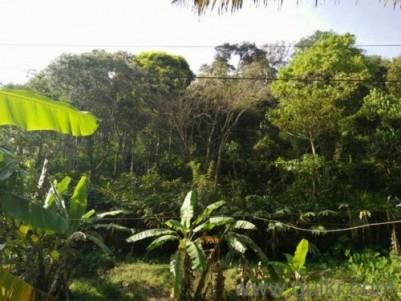 1 Acre 88 Cent Cardamom Plantation, Farm House and Irrigation 86.5 Lak