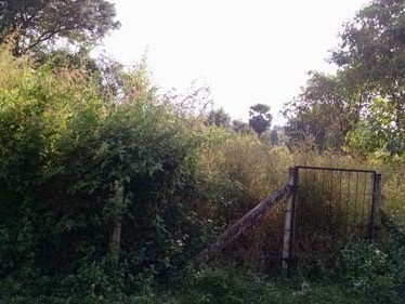 7.75 Cent Residential land for sale at Palakkad.