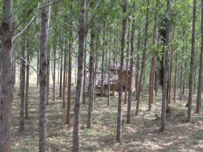 7  & 3 acre pattay land for sale at kovilkadavu