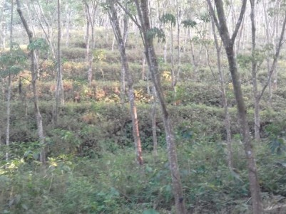 Property with Rubber plantation for sale at Vembayam,Madapuram, Trivandrum