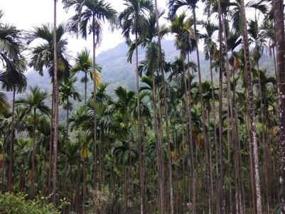 37.5 Acres of yielding Areca nut plantations for sale at Nilambur, Malappuram