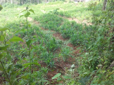 Residential land with old house for sale at Panamaram, Wayanad
