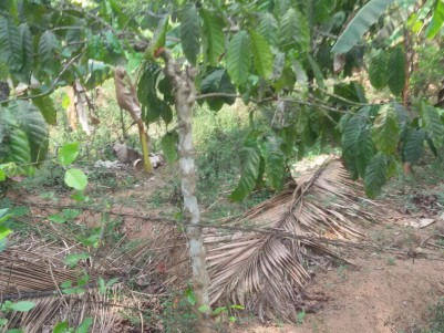 Residential land for sale at Mananthavady, Wayanad