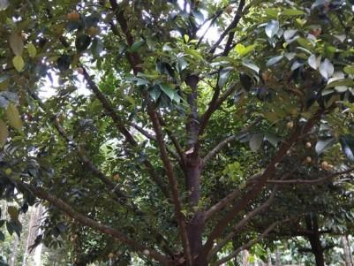 12.5 Acres of yielding plantations for sale at Thelpara, Nilambur, Malappuram