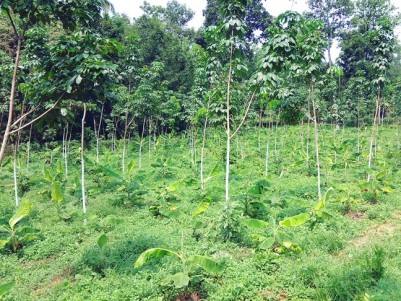 3 Acre land for sale at Kozhippilly, Kothamangalam, Ernakulam
