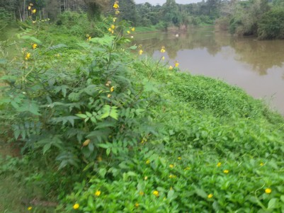 8 Acres of Farm land for sale at Mananthavady,Wayanad