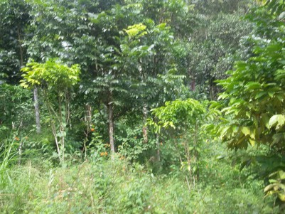 10 Acres of Farm land for sale at Sultan Bathery, Wayanad