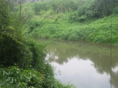 1 Acre Riverside farm land for sale at Kalpetta, Wayanad