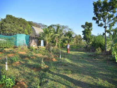110 Cent Farm land for Sale at Thiruvilwamala Thrissur