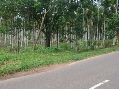 1 Acres of Arecanut Plantation for sale at Kalpetta, Wayanad