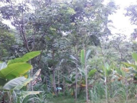 1.25 Acre Agricultural land for sale at Sultan Bathery, Wayanad