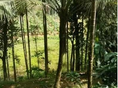 3 Acres of Agricultural land for sale at Sulthan Bathery,Wayanad.