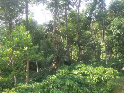 11 Acres of Agricultural / Resort land for sale at Ambalavayal, Wayanad.