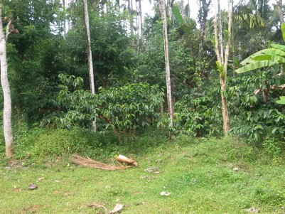 2  Acres of Agricultural land for sale at Sultan Bathery, Wayanad.