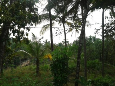 14 Cent Commercial cum Residential Land for sale at Thottada, Kannur.