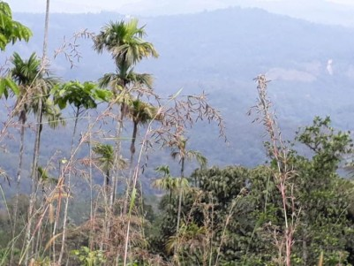 84 Cent Farm Land For Sale At Idukki.