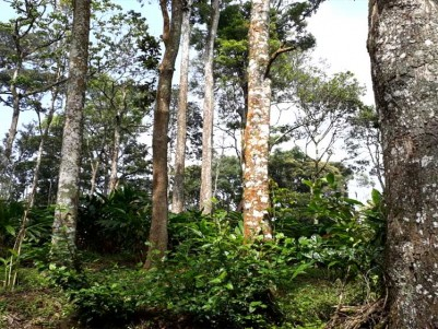 Cardamom Plantation for Sale at Kallipara, Santhanpara, Idukki.