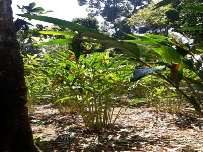 Cardamom Plantation For Sale at Santhanpara, Idukki.