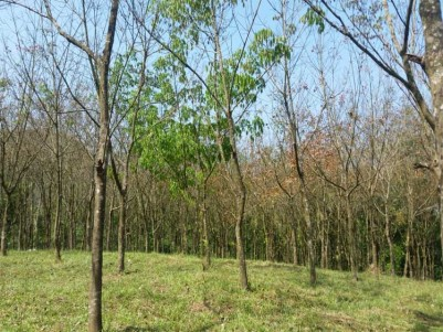 Rubber Plantation for Sale at Chakkikkavu, beside Kanjar- Elaveezhapoonchira Road.