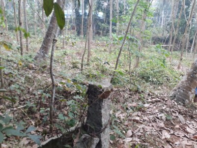 Rubber Plantation for Sale at Parassala, Thiruvananthapuram.