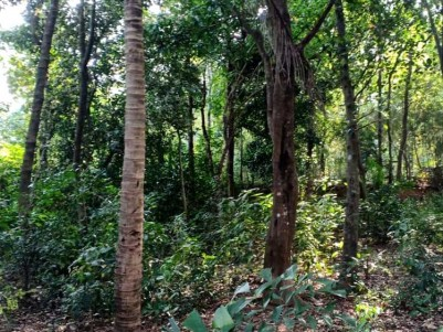 20 Cents of Residential Plot for Sale at Kallingal, Palakkad.