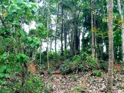 35 Cents of plain  Land for Sale at near karakkunnu, Malappuram