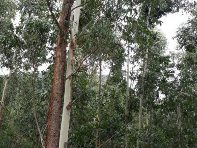 5 Acers Land for Sale at Vattavada, Idukki