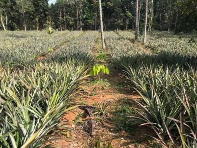 2.25 Acres Land for Sale at Near Pothanikkadu junction, Muvattupuzha