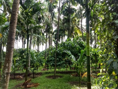 50 Cents of Residential Land for Sale at Cherukulam,  Calicut.