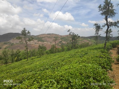 50 Cent Plot for sale at Vagamon with all facilities