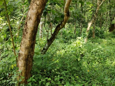 34 Cent of Land for Sale at Kurichy,Kottayam