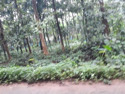 4.50Acres of Rubber Plantation  for sale at Elanji,Ernakaulam District