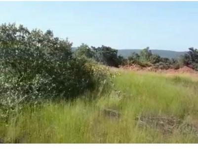 Land for Sale at Hosangadi,Kasaragod