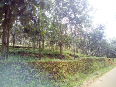 12 Acre Rubber Plantation for sale at Paika,Pala,Kottayam