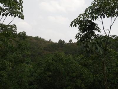 5.3 Acres of Plantation for sale at Manjeswaram,Kasargod