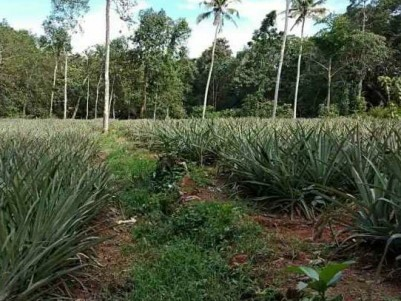 LAND FOR SALE IN VEMBILLY,KOTTAYAM