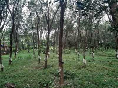 Rubber Plantation for sale  at Kottayam