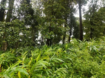 25 Acre cardamom plantation for sale at Munnar,Idukki