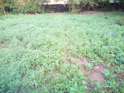 26 Cent Residential land for sale at SH mount Kottayam