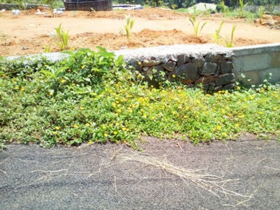50 Cent good residential land for sale close to KK road Manarkadu Kottayam