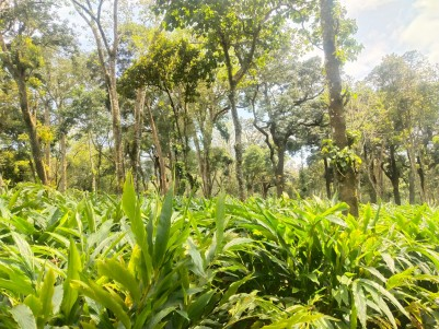 10 Acre Cardamom Plantation for sale @ Udumpanchola, Idukki