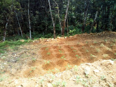 40 Cent Residential land (fully/partially) for sale near Illivalavu, Manarkadu, Kottayam