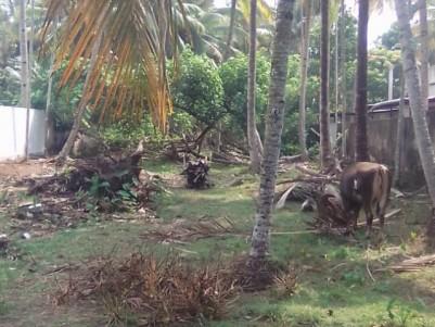 Residential land for sale in Parimanam, Neendakara, Kollam